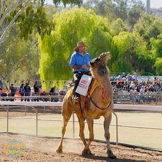 Camel Racing  #racing #camel #AliceSprings Travel Sights, Alice Springs, Caravan, Camel, Travelling, Road Trip, Scenery, Racing, Australia