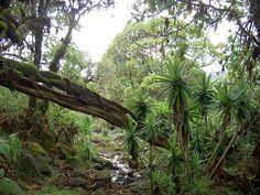 Kenya Safari Accedi al nostro sito Ulteriori informazioni Children In Africa, Mount Kenya, Forest Background, Forest Wallpaper, Beautiful Forest, Wallpaper Free Download, Go Green, Trees To Plant, Environment