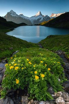 Shortly after sunrise at Bachalpsee with view of the Matterhorn, Switzerland