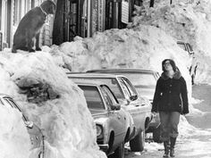 blizzard of 78 boston photos | The Blizzard of '78 love the DOG on top snow bank