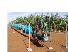 agricon - AGRICON cableway systems provide major productivity increases in agriculture by improving the handling and movement of hand-harvested crops from the farm to the packing area. Agriculture, Productivity, Cool Stuff, Stuff To Buy, Paradise, Korea, Knowledge, Packing, Banana