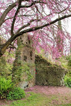 Spring - Ninfa gardens, Italy   by gatto-matto