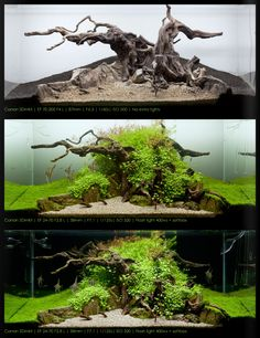 Ideas for the decoration of the aquarium 120 - Aquascaping