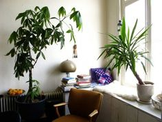 Plants in a quiet reading/MP3 private audio listening 'zone'.