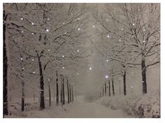 """Winter Trees"" Battery Operated LED Lighted Canvas #137"