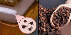 Get rid of bed bugs for good natural remedies to eliminate recipes included health and love page can you best way Homemade Face Moisturizer, Homemade Skin Care, Home Remedies, Natural Remedies, Small Garden Pots, Growing An Avocado Tree, Rid Of Bed Bugs, How To Make Guacamole, Eating Alone