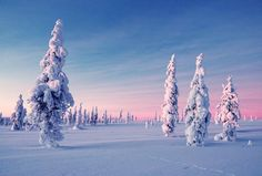 The polar night or Kaamos is a magical  period in Lapland... This is what the heart of winter looks like #Finland #whitewinter #christmasgetaway #christmasmagic #traveltheworld #christmasdream #visitlapland #arcticdream #winter #travelinstyle #youonlyliveonce #yolo