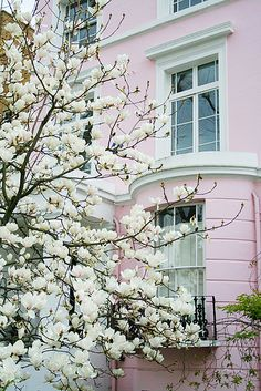Pink house and magnolia