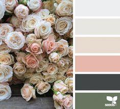 Color Flora | Design Seeds