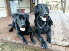 Lara i Major