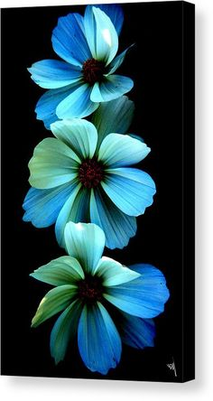 Flowers Canvas Print featuring the photograph Fire Flowers by Steve McKinzie