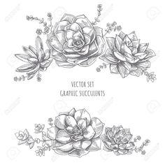 53198908-Floristic-composition-of-succulents-Succulent-drawing-on-white-background--Stock-Vector.jpg (1300×1300)