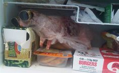 From the Freezer: Cool | Funny Pictures
