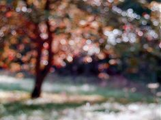 klaura / strom - impresia