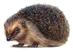 Robin Carter - Hedgehog - ink & airbrush