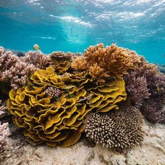 """Instagram'da Tourism Fiji 🇫🇯: """"Dive in and live a colourful life here in Fiji. #FindYourHappy Explore Kadavu's expansive reef system, rich marine life and endemic…"""" Fiji Islands, Marine Life, Tourism, Explore, Live, Color, Turismo, Colour, Travel"""