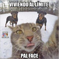 Imágenes, memes GIF y vídeos graciosas en la web de Cabras Espartanas. El mejor humor para compartir con amigos en Facebook, WhatsApp. Funny Animal Memes, Funny Animal Pictures, Cute Funny Animals, Cute Baby Animals, Cat Memes, Cute Cats, Funny Cats, Funny Memes, Memes Humor