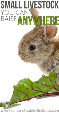 Small Livestock you can Raise Anywhere> Don't know if I could raise and eat little bunny wabbits.