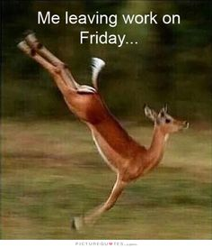To picdump leaving work on friday, spring girl, friday meme, bestfrien Friday Quotes Humor, Funny Friday Memes, Funny Quotes, Friday Funnies, Funny Humour, Funny Sms, Monday Memes, 9gag Funny, Dad Quotes