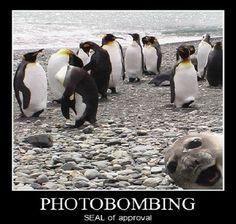 50 Best Photobomb Pictures | Best Viral Web Content
