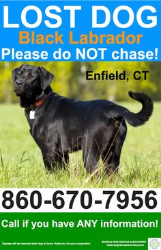 Buddha Dog Rescue & Recovery      Facebook folks we need your help... A man was seen last night by Scantic river/ Powder Hollow in Enfield, CT with his black lab the dog wasn't listening and the man was seen driving away, leaving the dog behind. The dog was seen this morning (May, 12th) on a path with the leash dragging, he was frightened and wouldn't come to anyone. The dog is wearing a red collar and dragging a leash. any sightings please call 860-670-7956 *dog in photo is not actual dog
