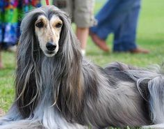 oh my god i would braid the shit out of that dogs hair