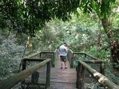 Dlinza forest areal boardwalk Eshowe