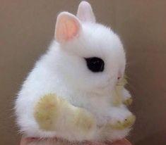 Teeny Little Bunny!