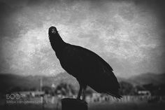 The vulture on my dark side..!! by Just_Afrodita
