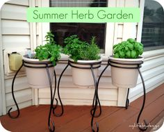 MY LIFE BY DESIGN: I never promised you an herb garden...