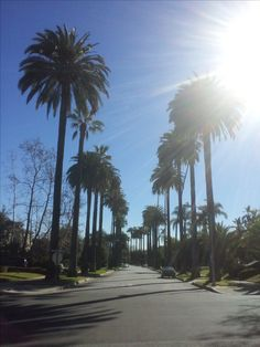 palm trees alley - Los Angeles #instagallery