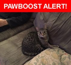 Please spread the word! Pixie was last seen in Vancouver, BC V5T 2W7.    Nearest Address: Near Ontario Street, Vancouver, BC, Canada