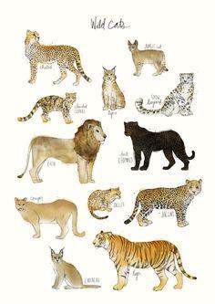 "Katzen - Amy Hamilton - Leinwanddruck - Kunst / Art -Wilde Katzen - Amy Hamilton - Leinwanddruck - Kunst / Art - ""Silent Wings"" Stickers by Anita Inverarity Animal Drawings, Art Drawings, Vogel Illustration, Art Et Design, Clouded Leopard, Jungle Cat, Cat Art Print, Animal Art Prints, Print Print"