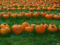 Pumpkins on Parade  8X10 photo by BlueberryBayPhotos on Etsy, $20.00