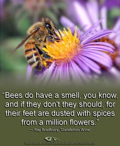 """Bees do have a smell, you know, and if they don't they should, for their feet are dusted with spices from a million flowers."" ― Ray Bradbury, 'Dandelion Wine' http://www.facebook.com/OasisAdvancedwellness"
