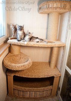 Cool Cat Trees, Diy Cat Tree, Cat Tree House, Cat Tree Condo, Cat Castle, Cat Fence, Cat Towers, Animal Room, Cat Enclosure