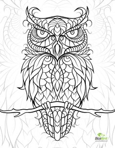 diceowl-free printable adult coloring pages Try this Owl free drawing, download…