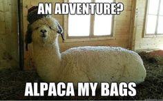 fun puns alpaca my bags