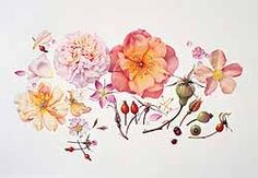 1000 Years Of Botanical Art At Oxford's Ashmolean Museum | Culture24