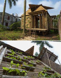 Bamboo Architecture Housing Vietnam