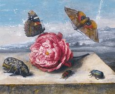 Margareta. de Heer Still Life with Insects 1655
