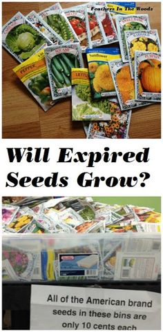 Are sale priced seeds woth it? Will they still grow? What will the plants be like? I'll give you answers to all these questions and more!