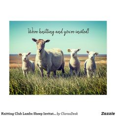 Knitting postcard invitation to a knitting group, knitting lessons, yarn shop event, yarn sale, thank-you card. Cute sheep and lambs custom postcard with text on front and back is perfect for fiber artists. #knittingpostcards #sheeppostcard #knittinggroup #sheepinvitation #fiberarts #yarnshop Postcard Invitation, Invitations, Online Yarn Store, Knitting Club, Yarn For Sale, Cute Sheep, Sheep And Lamb, Wool Art, Custom Postcards