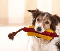 Hunde-Spielzeug Hotdog von Tchibo