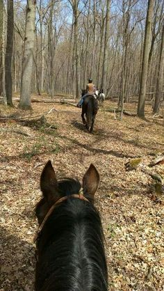 Gentle Giant's Rescue Trail Ride 2014
