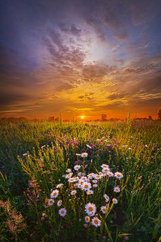 Yellow spring by Phil Koch on 500px