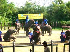 Elephant Show Bangkok, Thailand  http://ibourl.com/uow