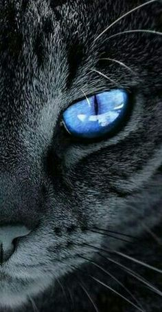 Cat name Indigo Cute Cats And Kittens, I Love Cats, Big Cats, Cool Cats, Kittens Cutest, Cute Cat Wallpaper, Animal Wallpaper, Black Cat Aesthetic, Tier Fotos