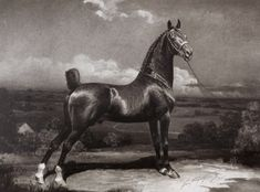 Thornhome Imported Hackney stallion Thornhome as seen in George Ford Morris' 1934 Annual of Stars. Thornhome, foaled in 1919, was bred by Enoch Glenn of Bathgate, Scotland. He stood at stud in the 1930s at Dicksfield Farm, owned by the founders of the A.B. Dick Adding Machine Company, and later at Fieldview Farm, owned by Mr. & Mrs. Donald Ormsby Page, where he was known as Fieldview Thornhome.