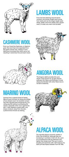 got wool - the different kinds. So weird, my boyfriend and I were just discussing last night why Angora goats make Merino wool. Came from a animal. Knitting Projects, Knitting Patterns, Crochet Patterns, Loom Patterns, Knitting Yarn, Wool And The Gang, Wooly Bully, Spinning Wool, Spinning Wheels